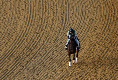 2013 Preakness Stakes Betting Picks - Winner and Trifecta