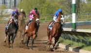 Blue Grass Stakes