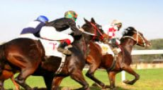 Horse Betting Win Odds and Payoffs Explained